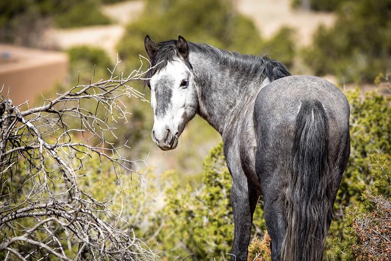 Placittas Wild Horses