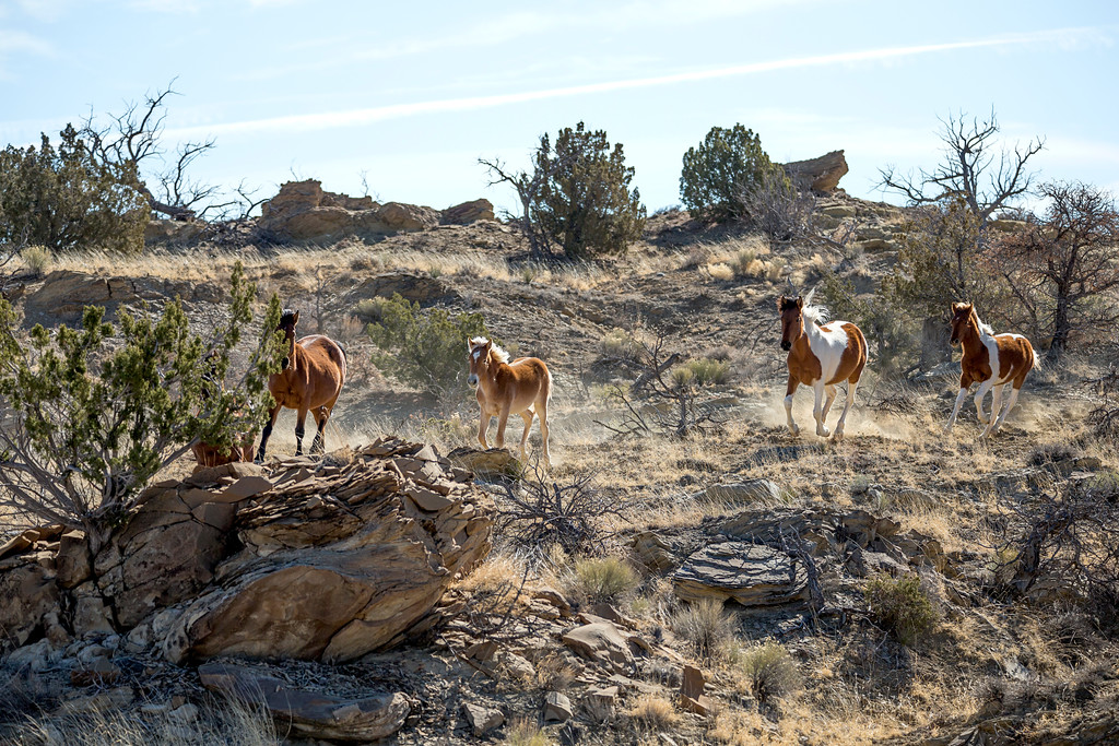 City of dust: Hagan ghost town New Mexico Wild Mustangs