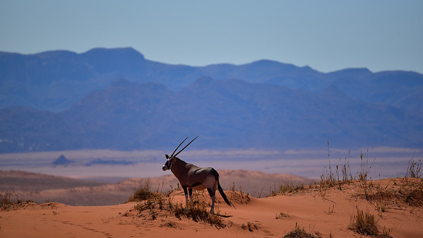 Highlights of Namibia