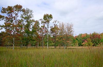 Intermittent pond habitat