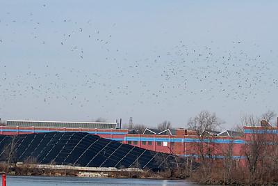 Gulls, gulls, gulls....