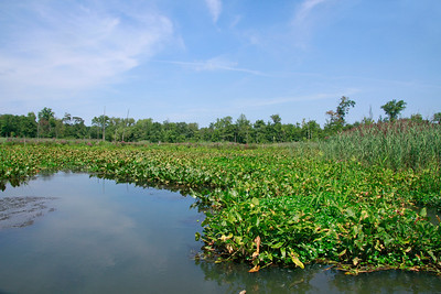 Hamilton Trenton Marsh