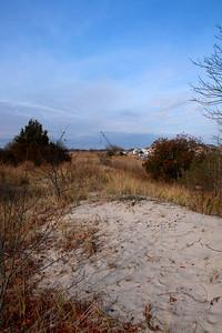 Artemisia campestris habitat shot