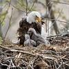 Eagles nest tours!<br /> ray@raymondbarlow.com
