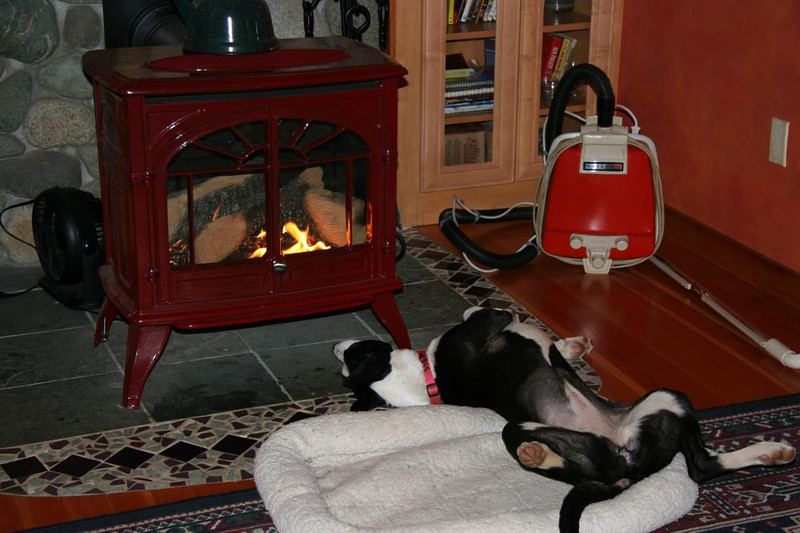 Flipper is rather, uhm, comfortable in front of the fire.  No manners though.