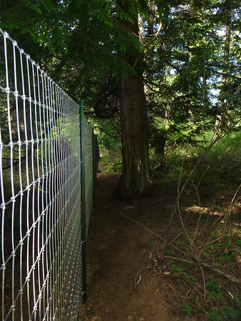 2015 May - Fence and Interior