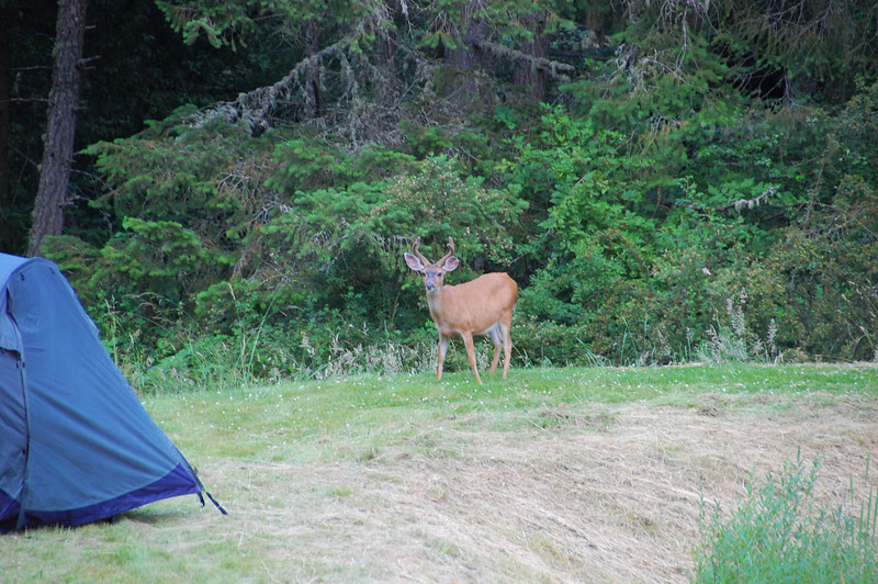 a young buck wonders what we're doing on his property