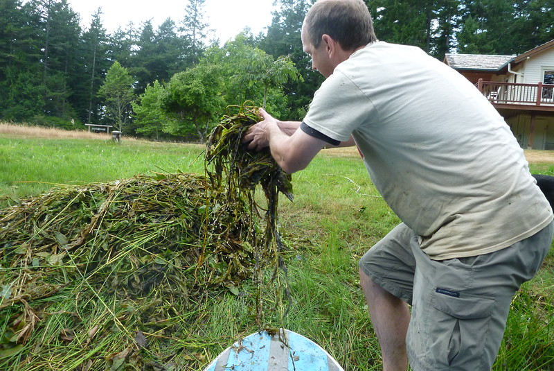 Nigel weeding the pond.