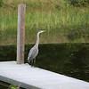 WildRileys-HeronDock.jpg