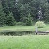 WildRileys--PondFromDallasNest.JPG