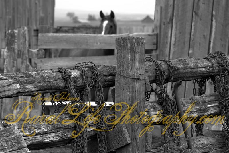 Kayser Ranch