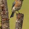 Mrs. Blue seems to be doing all the work
