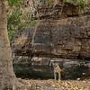 Wild tigress cooling off in a waterhole during Ranthambhore's hot summers