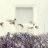 English Sparrow 5x7