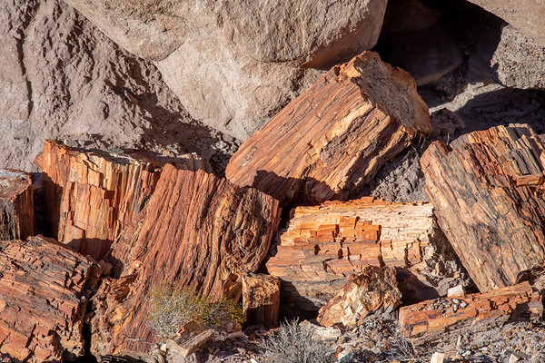 Pile of Petrified Wood