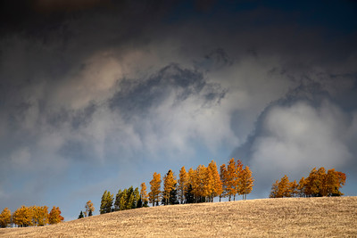 Incoming Storm and Aspens, New Mexico