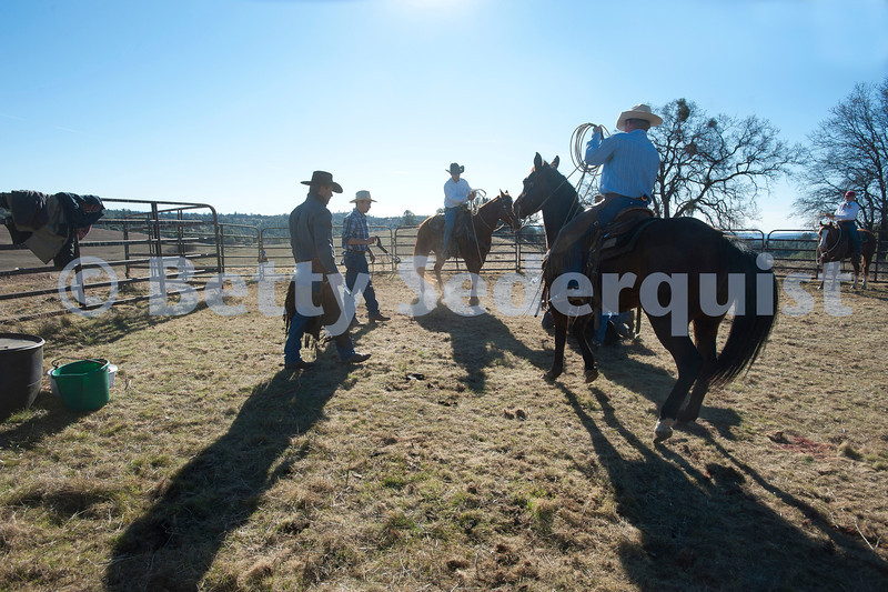 Cowboys Roping Calf