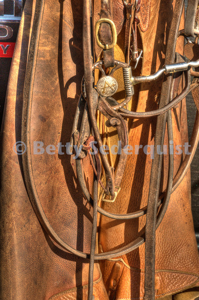 Chaps and Bridle at Calf Roundup