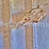 Old Cow Skull in Barn, California Ranch