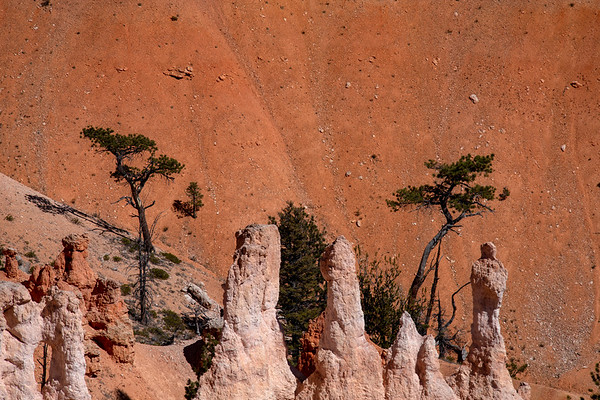 Trees, Bryce