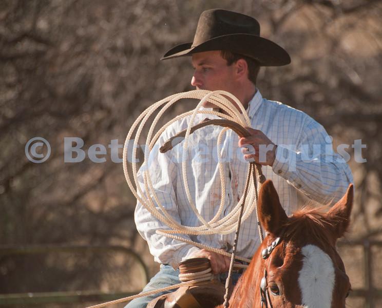 Cowboy Prepares to Rope Calf