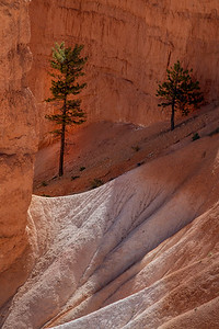 Trees and Sandstone, Bryce
