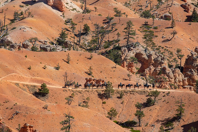 Horses, Bryce Canyon
