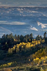 Fall Aspens, Escalante