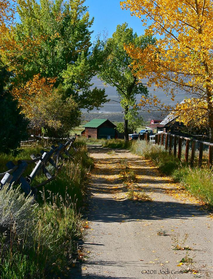 Leaf Laden Road, Suburbs of Kremmling, Colorado