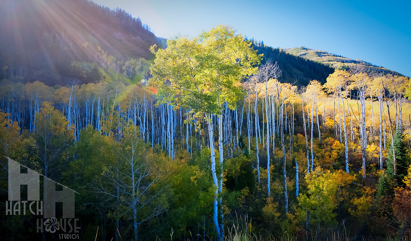 Riot In The Aspens, Rocky Mountain Fall Colors of Colorado
