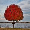 D85_2492_GC_Tree_25Nov_L