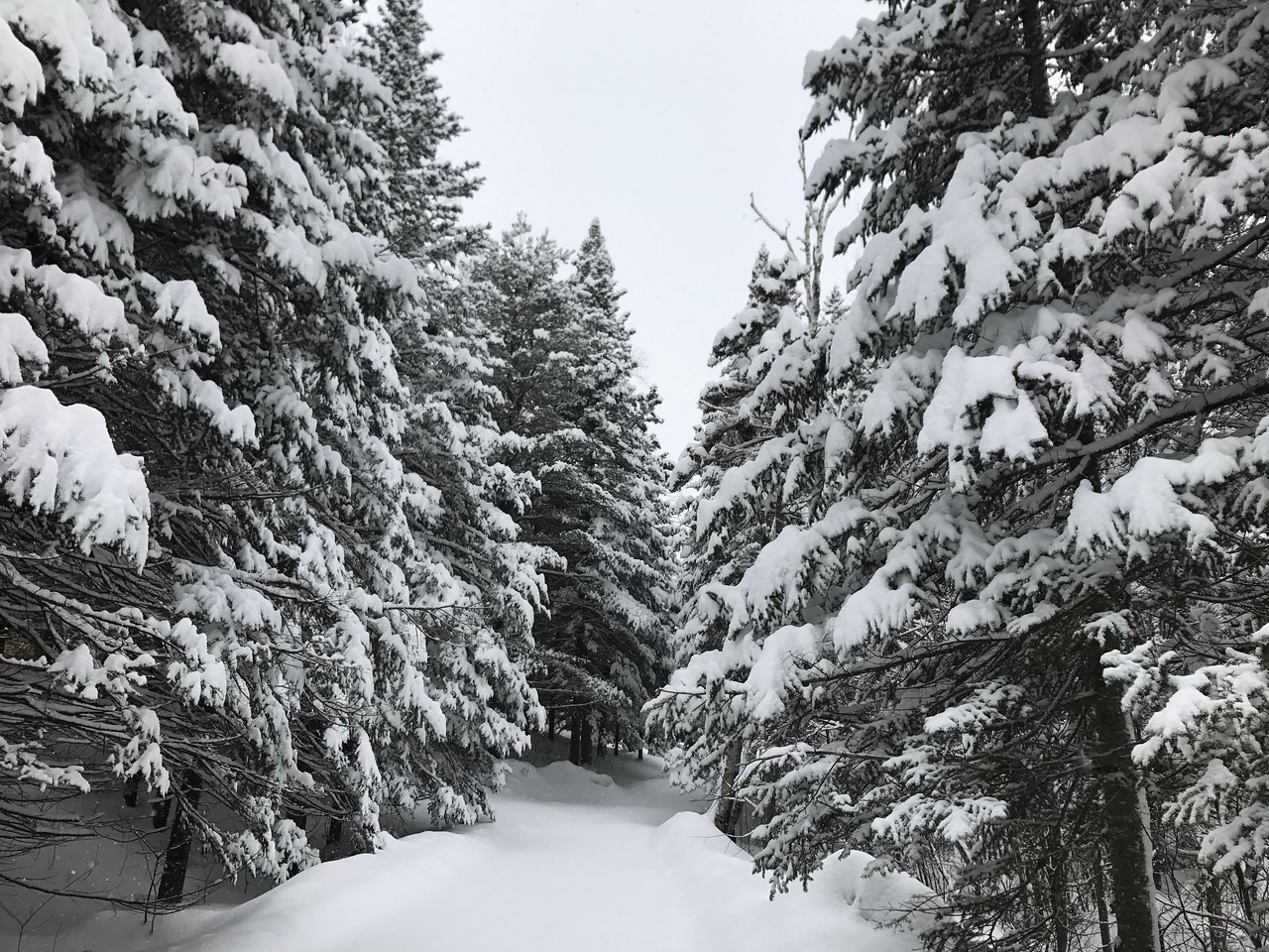 I love snow days