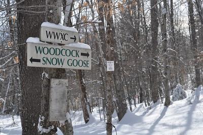 Let's go ski the Snow Goose