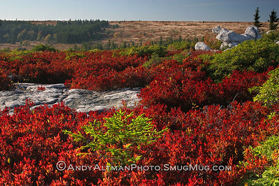 Dolly Sods Fall