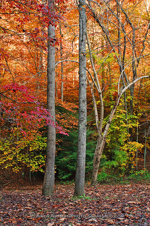 Autumn, Kanawha State Forest