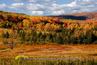 Canaan Valley Fall Meadow
