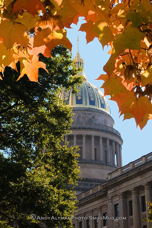 Capitol Dome framed by Maple