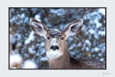 """""""Snow Doe""""  12 x 18"""