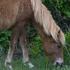 wild ponies        1111sm