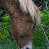 wild ponies        1311 smpsd