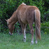 wild ponies        411 smpsd