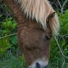 wild ponies        1211 smpsd