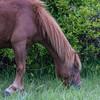 wild ponies        1711sm