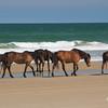 wild horse         2411sm