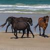 wild horse         3911sm