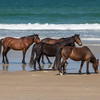 wild horse         3311sm