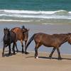 wild horse         3811sm