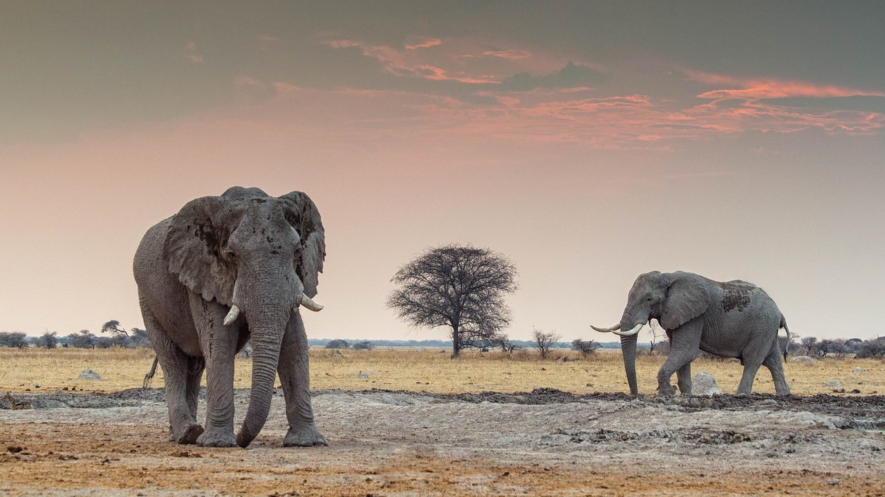 Gentle Giants Elphants