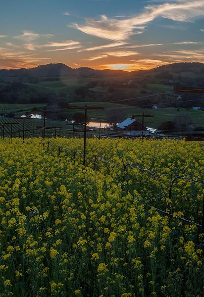 Sundown at Blue Creek Vineyards