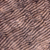 Wave patterns on sandstone rock. Kimberley region, Northern Territory.